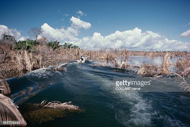 The remains of chestnut trees in Para poke their heads above water after being submerged as a result of the construction of the Tucurui dam