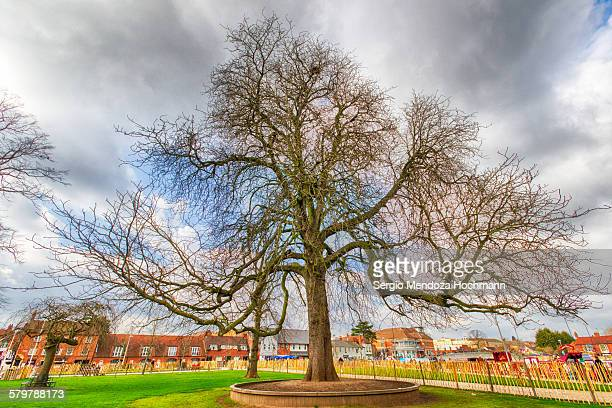 The remembering tree in Stratford-upon-Avon, UK