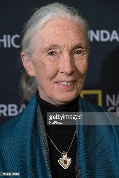The renowned primatologist Dr Jane Goodall offers a lecture at the Casino Madrid Spain on May 25 2016