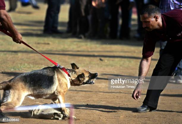the rescue dog squad of National Disaster Response Force demonstrates their skills to combat natural disasters like Earthquakes Tsunamis etc the 2...