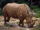 The Rhino and the Starling