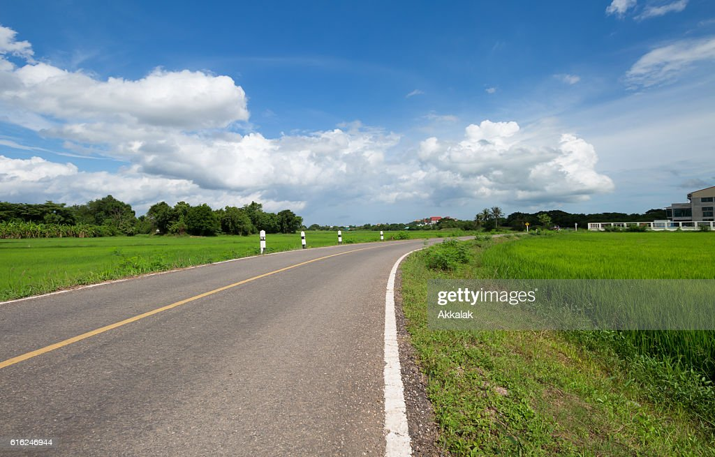 The road pass trough green rice field : Stock Photo