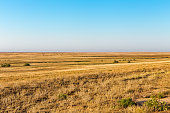 The road to the endless steppe. Scorched savannah