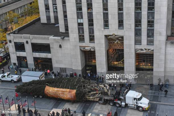 The Rockefeller Center tree arrives on November 11 2017 in New York City The 75foot Norway Spruce from State College Pennsylvania will become the...