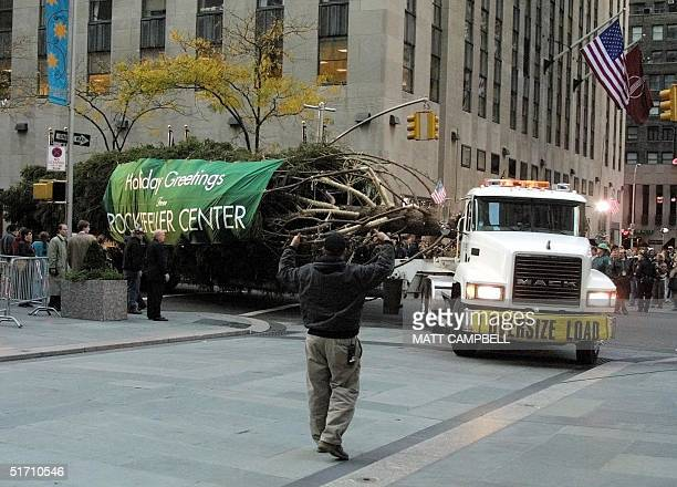 The Rockefeller Christmas tree arrives at Rockefeller Plaza on a flatbed truck 09 November 2001 in New York City The tree which will be lit in the...