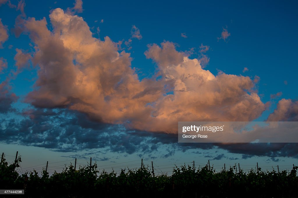The rolling hillsides of Gallo's Two Rock Vineyard are viewed before sunrise on June 4 in Cotati California Despite a four year drought California's...