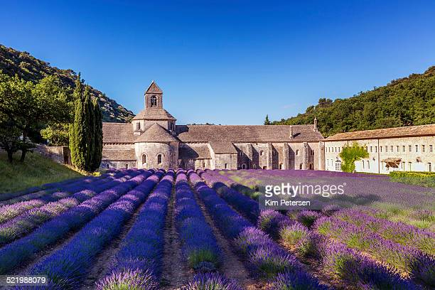The Romanesque Cistercian Abbey of Notre Dame of Senanque set amongst flowering lavender fields, near Gordes, Provence, France