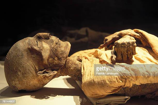 The Royal mummy of Merneptah in April 2006 at Cairo Museum Egypt Merneptah was the fourth ruler of the 19th Dynasty of Ancient Egypt He reigned Egypt...