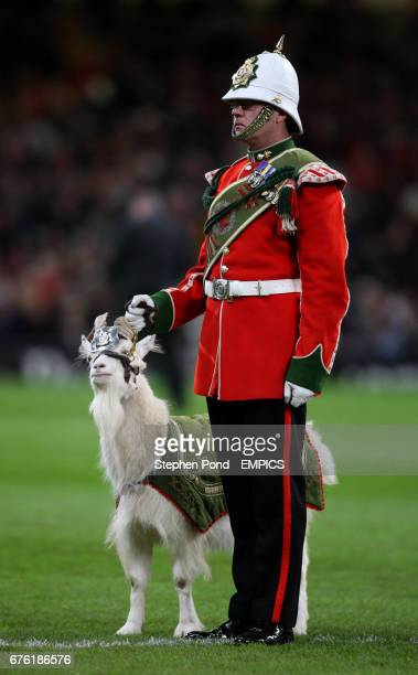The Royal Welsh mascot Goat and the Goat Major