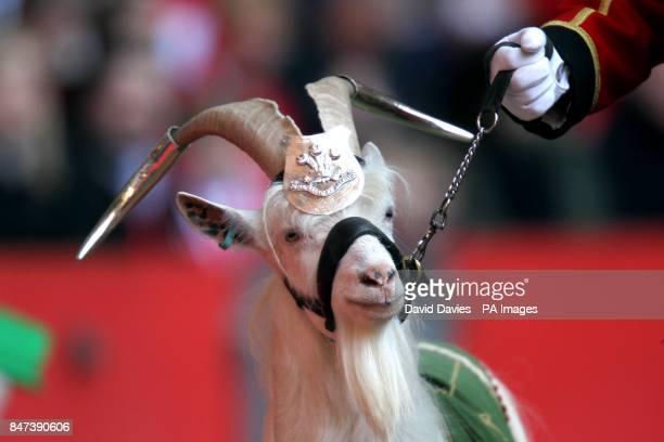 The Royal Welsh mascot Goat