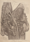 the sacral plexus is a nerve plexus which provides motor and sensory nerves for the posterior thigh most of the lower leg the entire foot and part of...