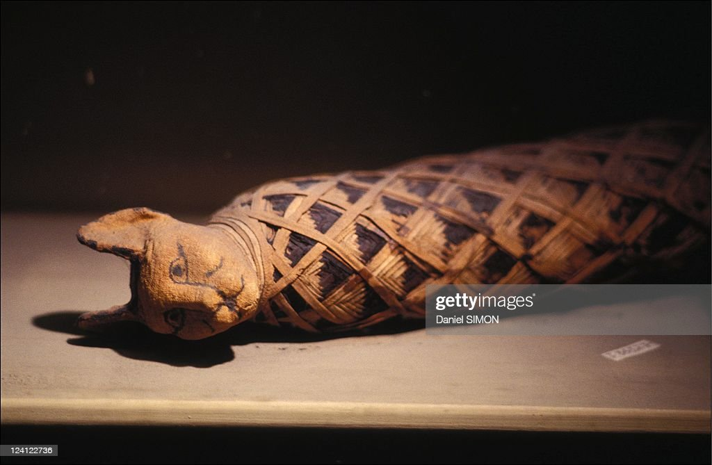The sacred animals of ancient Egypt on February 26 1992 Cat mummy
