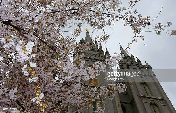 The Salt Lake Temple is framed by Cherry blossoms during the 184th annual general conference of The Church of Jesus Christ of Latter Day Saints...