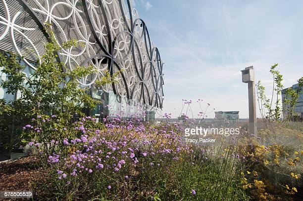 The 'Secret Garden' a bird bee friendly urban garden on the 7th floor roof terrace of the Library of Birmingham the largest public cultural space in...