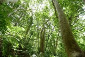 The semitropical forest in the Yambaru region of Japan's southernmost island prefecture of Okinawa is pictured on June 29 2016 Endangered species...