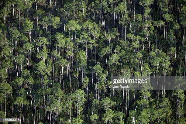 The sensitive ecological landscape of the Everglades National Park home to many endangered and rare plants is seen from the air on March 16 2015 in...
