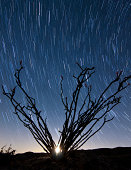 The setting moon is visible through the thorny branches on an ocotillo in the Santa Rosa Mountains of Anza Borrego Desert State Park, California