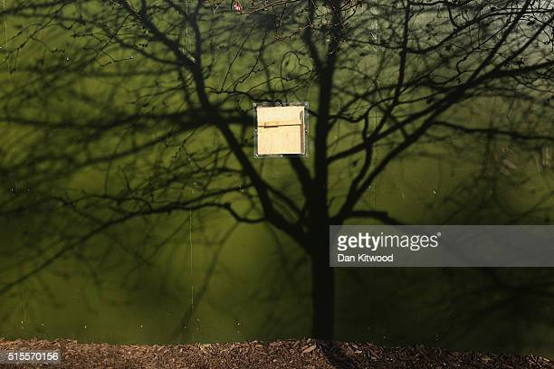The shadow of a tree is cast on boarding in St James's Park on March 14 2016 in London England Great Britain is to enjoy several days of mild...