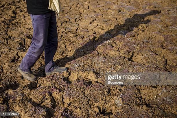 The shadow of farmer Khajju Ahirwar is cast on his driedup field in the village of Patharkhera in Tikamgarh Madhya Pradesh India on Saturday Feb 9...