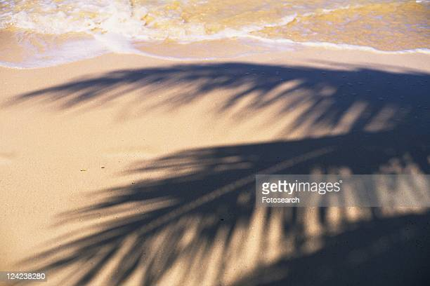 The Shadows of Palm Tree on a Beach, High Angle View