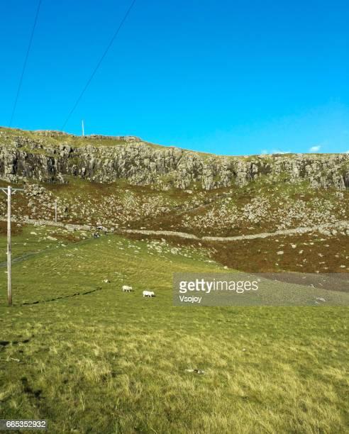 The sheep on the way to Neist Point, Glendale, Isle of Skye, Scotland