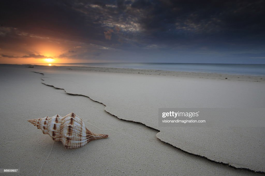 The Shell : Stock Photo