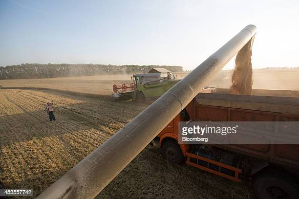 The side pipe of a Class KGaA combine harvester dumps wheat grain into a wagon during the summer harvest on the OOO Barmino farm enterprise in...