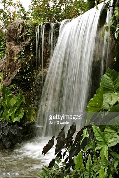 The Singapore Botanic Gardens has a small tropical rainforest of around six hectares in size which is older than the gardens itself The Botanic...