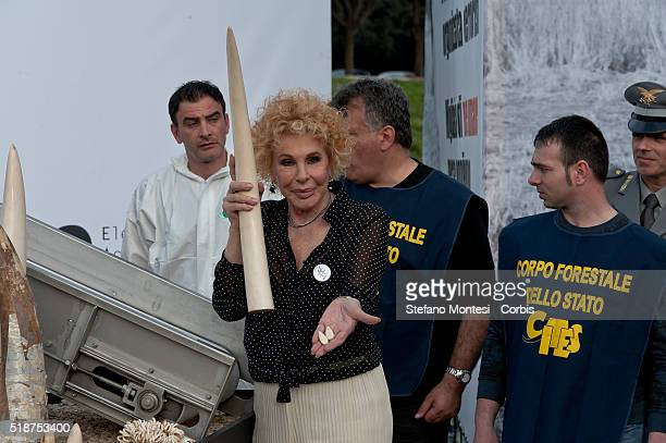 The singer Ornella Vanoni took part in the first public ivory crush in the Circus Maximus on March 31 2016 in Rome Italy The Elephant Action League...
