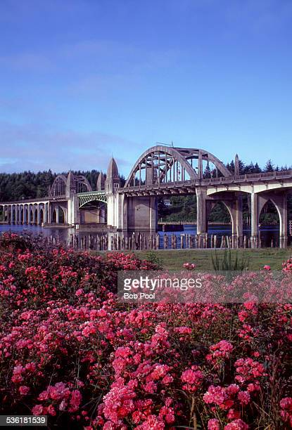 The Siuslaw River Bridge with field of red roses