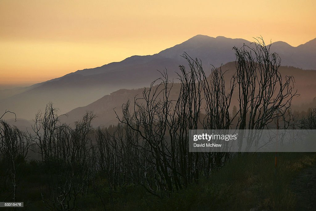 The skeletal remains of a landscape burned during the historic 2003 wildfire season are seen at sunset on August 1, 2005 east of Lake Arrowhead, California. Last winter was one of the wettest on record, dropping 90 inches of rain in some southern California mountain areas and creating the thickest vegetation growth in memory, and damaging more than 2,000 miles of fire access roads used to protect 2.3 million acres of forests. In addition to the many thousands of trees killed by a massive pine beetle infestation, newly grown vegetation is drying up under triple-digit temperatures and raising fears of a repeat of the devastating fire season of 2003. President Bush signed an emergency funding bill in May allocating $25 million to fix roads in southern California?s national forests but Congress has acted slower than expected in providing the money so some of the repairs might not be done until October.