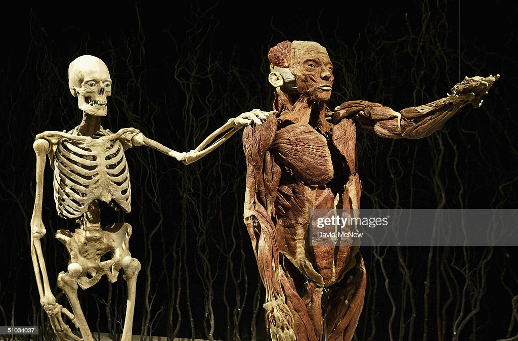 """""""Body Worlds"""" Displays Cadavers As Art 