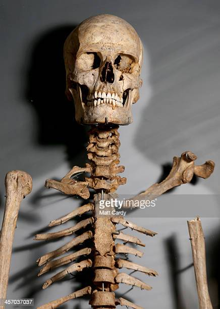 The skeleton of a Neolithic man is seen inside the new Stonehenge visitor centre and exhibition on December 11 2013 in Wiltshire England English...