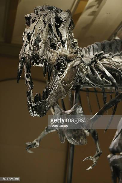 The skeleton of Tristan the Tyrannosaurus Rex stands on display on the first day Tristan was exhibited to the public at the Museum fuer Naturkunde on...