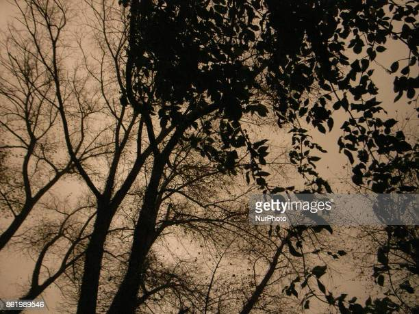 The sky over a park in south London UK turns red on October 16 2017 As storm Ophelia passes over the UK and Ireland sand from the Sahara is carried...