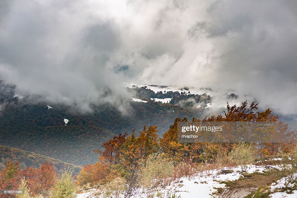 The slope with snow and beautiful, colorful autumn trees : Stockfoto