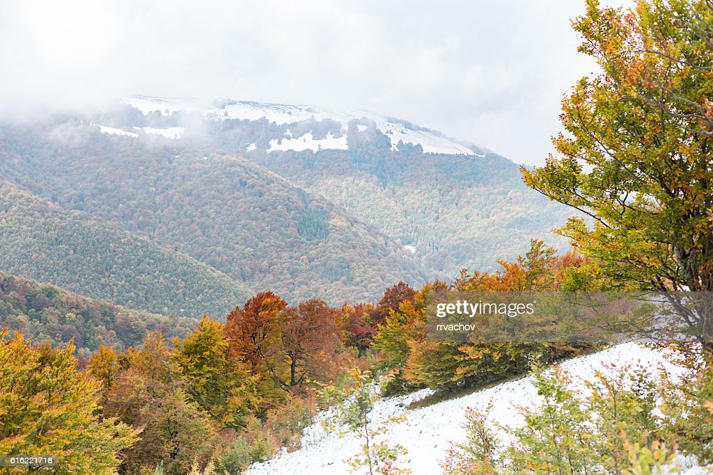 The slope with snow and beautiful, colorful autumn trees : Stock Photo