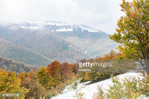 The slope with snow and beautiful, colorful autumn trees : ストックフォト