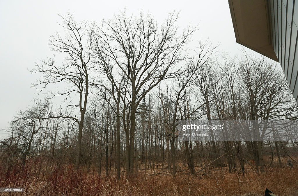 TORONTO JANUARY 24 The small collection of woods on the property of Scarborough Chinese Baptist Church which owns the property today The Vimy Oaks of...