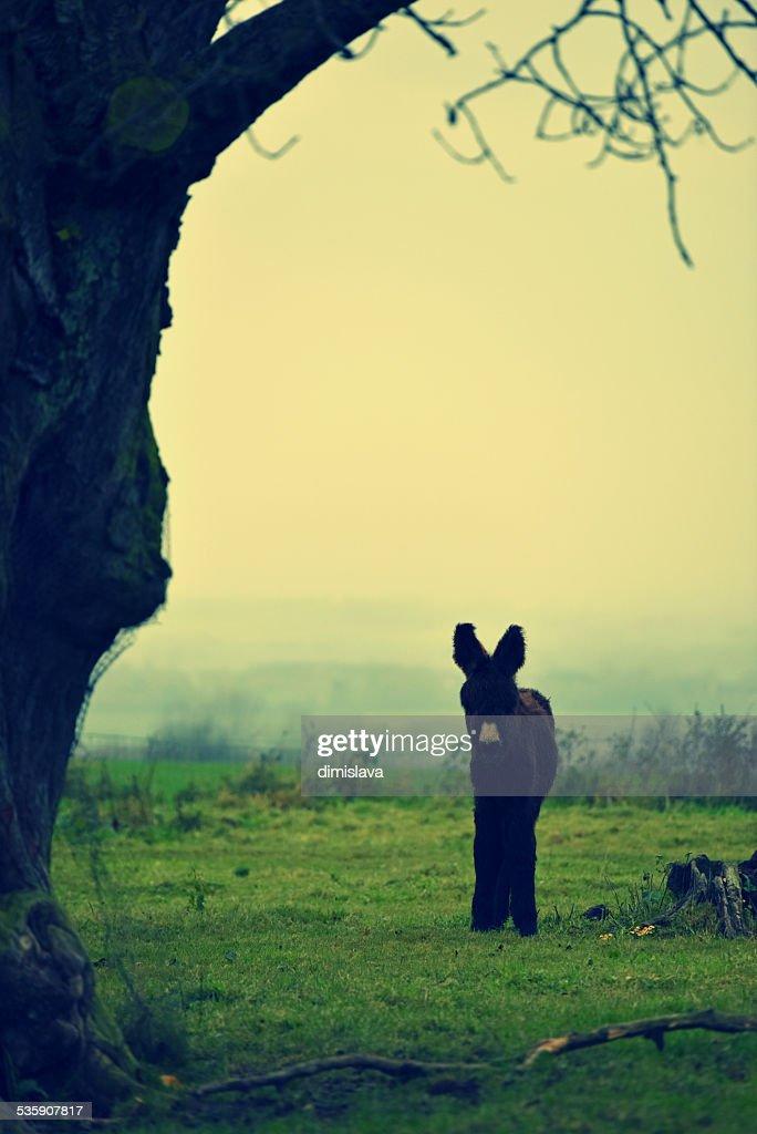 The small donkey : Stock Photo