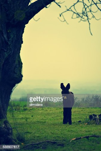 The small donkey : Foto stock