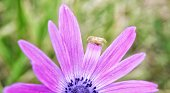 The weight of a very small spider can bend the delicate petal of a flower