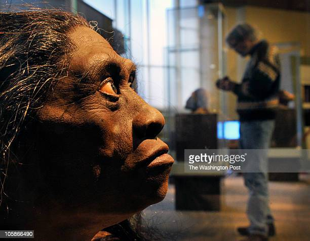 The Smithsonian Museum of Natural History is about to open its' new Hall of Human Origins March 15 2010 in Washington DC Pictured a sculpted model of...