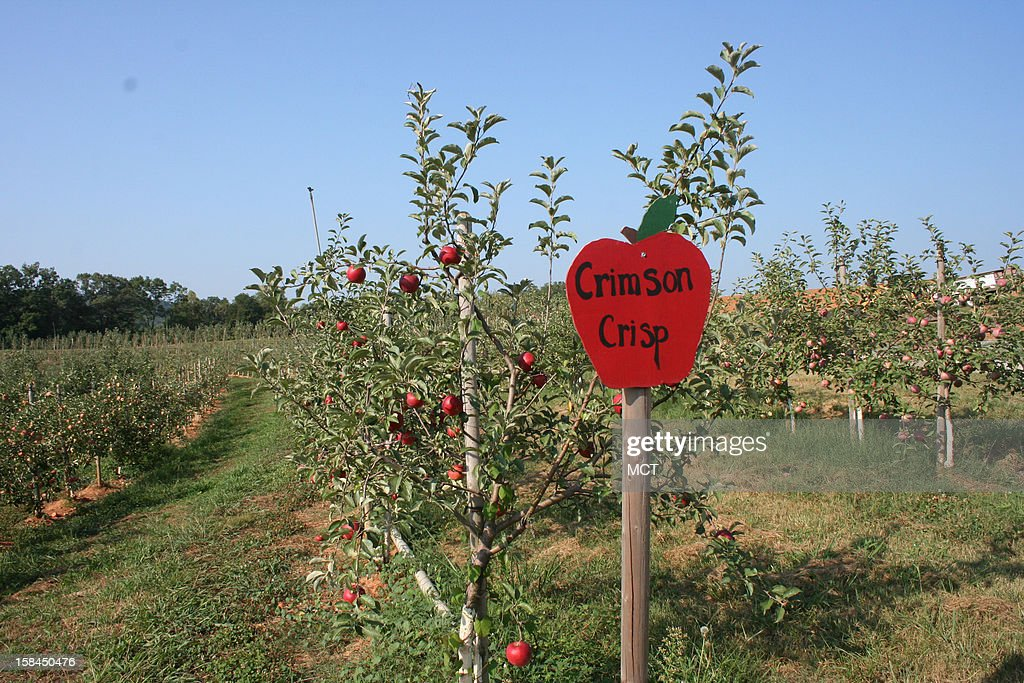 The soil is perfect for apple growing at Mercier Orchards in Blue Ridge, Georgia. At 300 acres, it is Georgia's largest orchard.