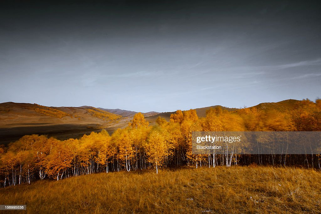the sound of the wind : Stock Photo