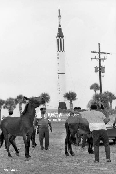 The Southern Christian Leadership Conference's Poor People's marchers line up their reluctant mules near the gates to the Kennedy Space Center prior...