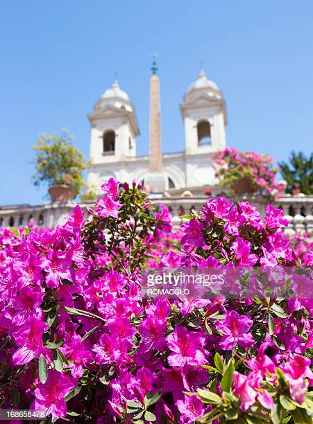 The Spanish Steps in Rome with Azalea flowers, Italy