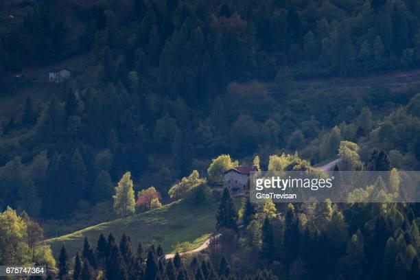 The spring forest - Castello Tesino,Trento, Italy