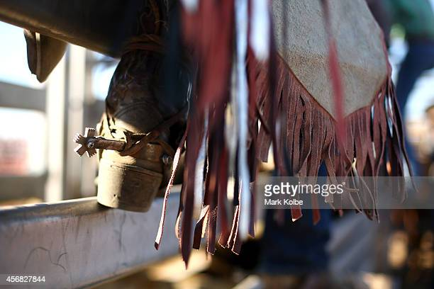 The spurs of a bullrider are seen as he waits for his ride in the Bull Ride Spectacular on the first day of the 2014 Deni Ute Muster at the Play on...