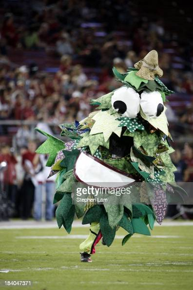 The Stanford Cardinal mascot tree performs against the Washington Huskies on October 5 2013 at Stanford Stadium in Stanford California